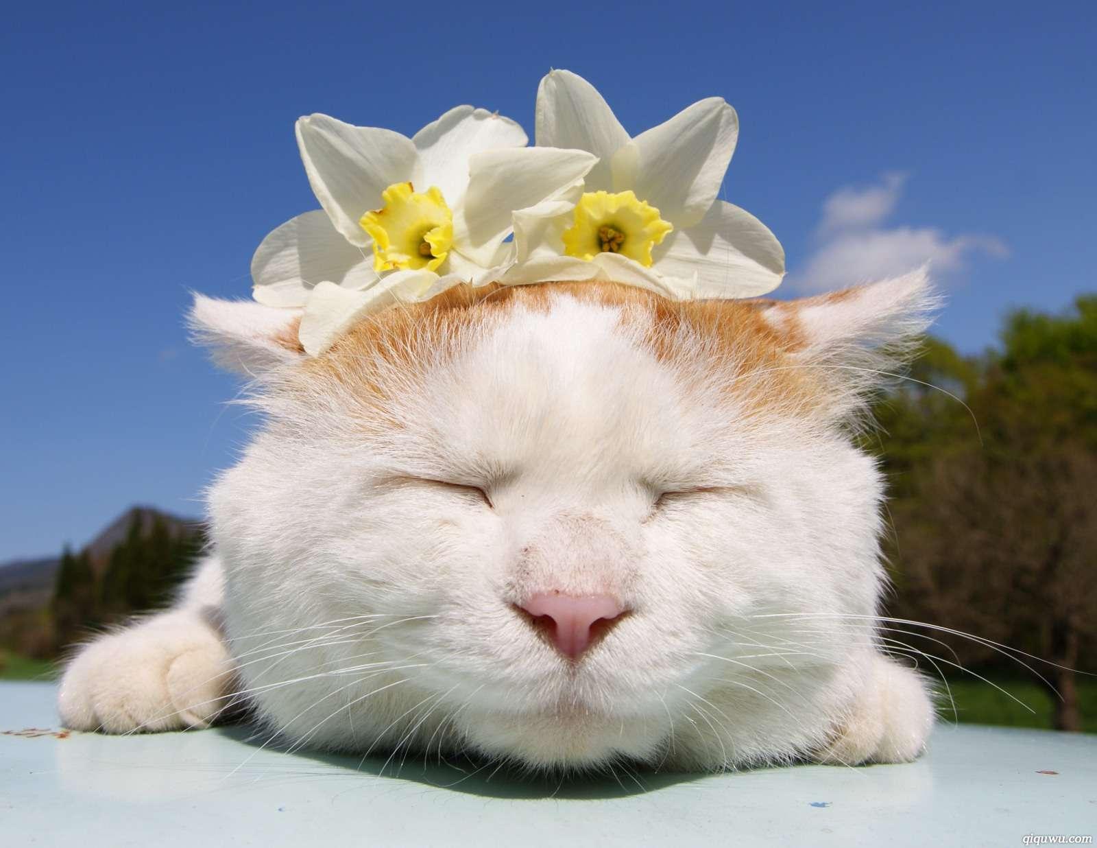 资讯配图_商务部网站新闻配图误用猫叔照片网友大呼被