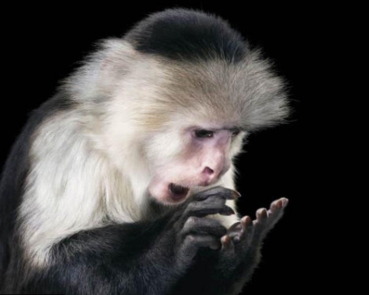 野生动物表情酷似人类